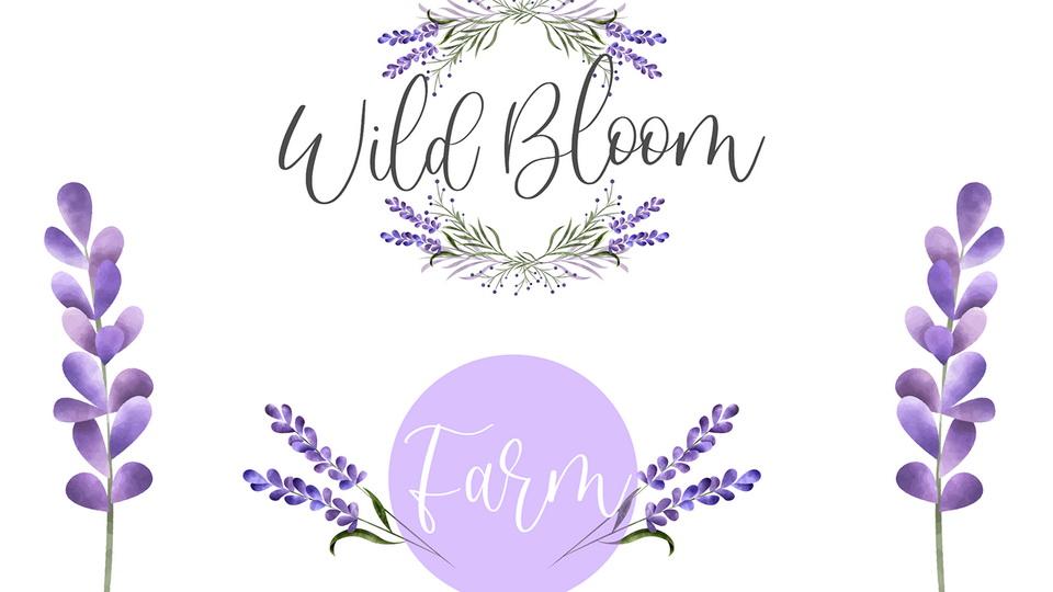 sweet_lavender-1