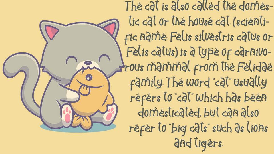 catty_funny-4